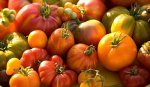 heirloomtomatoes_1994_general